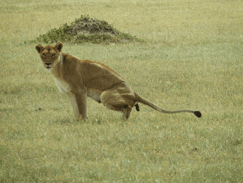 Serengeti Day trip Safari from Mwanza - Tour