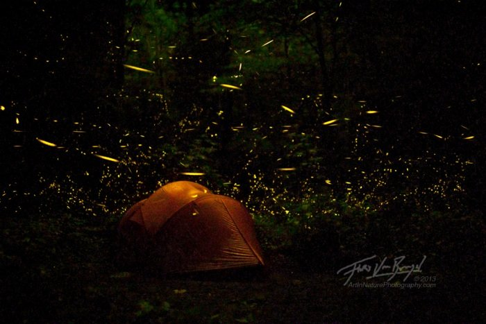 KONDHANA FIREFLIES TREK - Tour