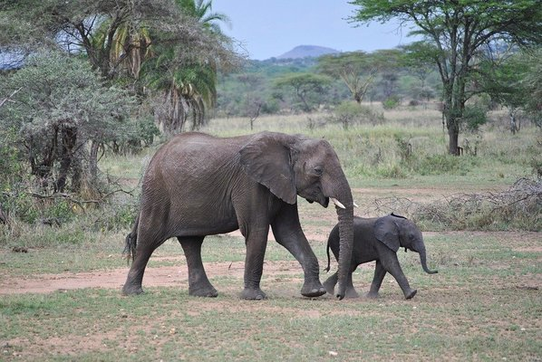 Mikumi Day Trip Safari from Dar es salaam - Tour
