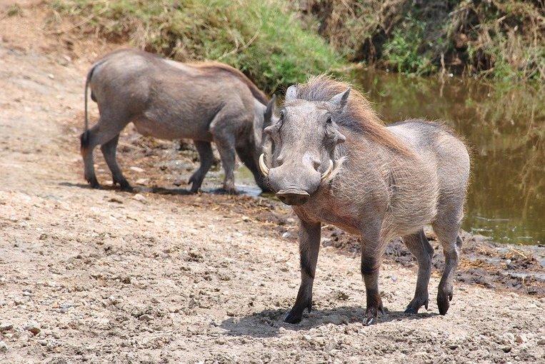 Tarangire Day trip Safari from Arusha - Tour