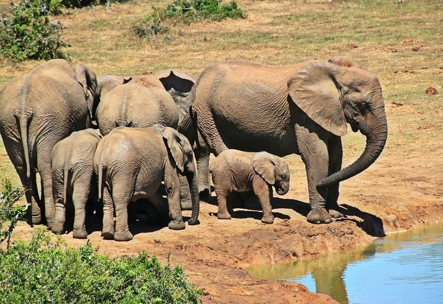 3-Day Lodge Safari from Mwanza. - Tour