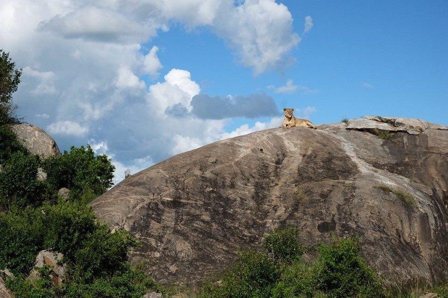 9 Days Photography Safari in Tanzania - Tour