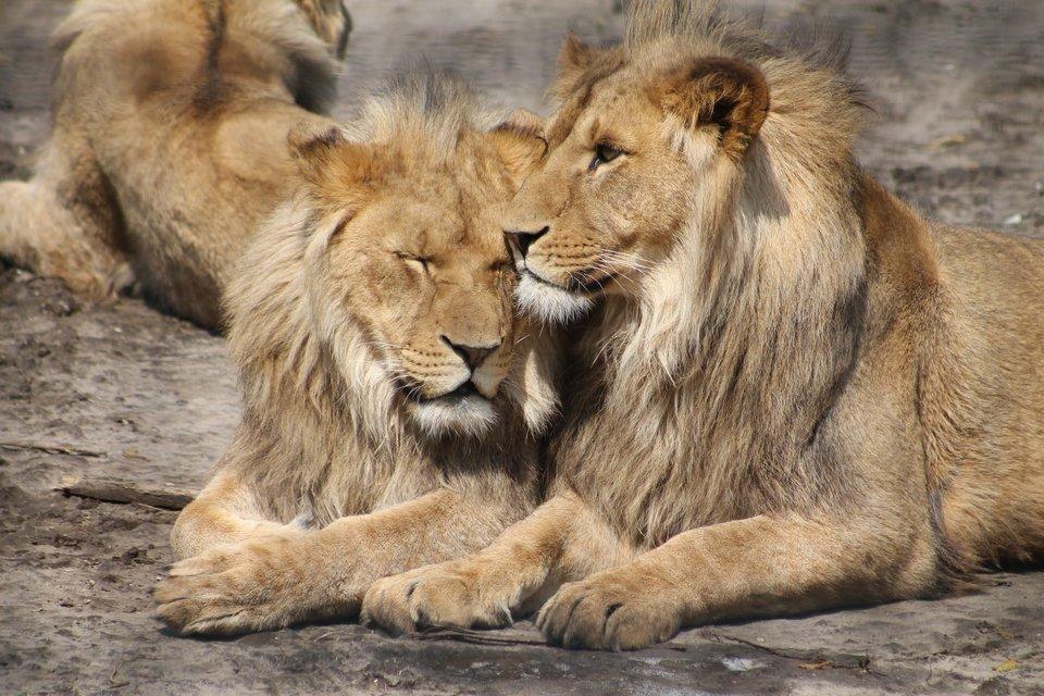 10-Day Tanzania safari adventure - Tour