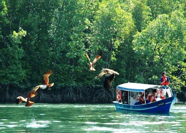 Geopark Mangrove Cruise, Sightseeing in Langkawi - Tour