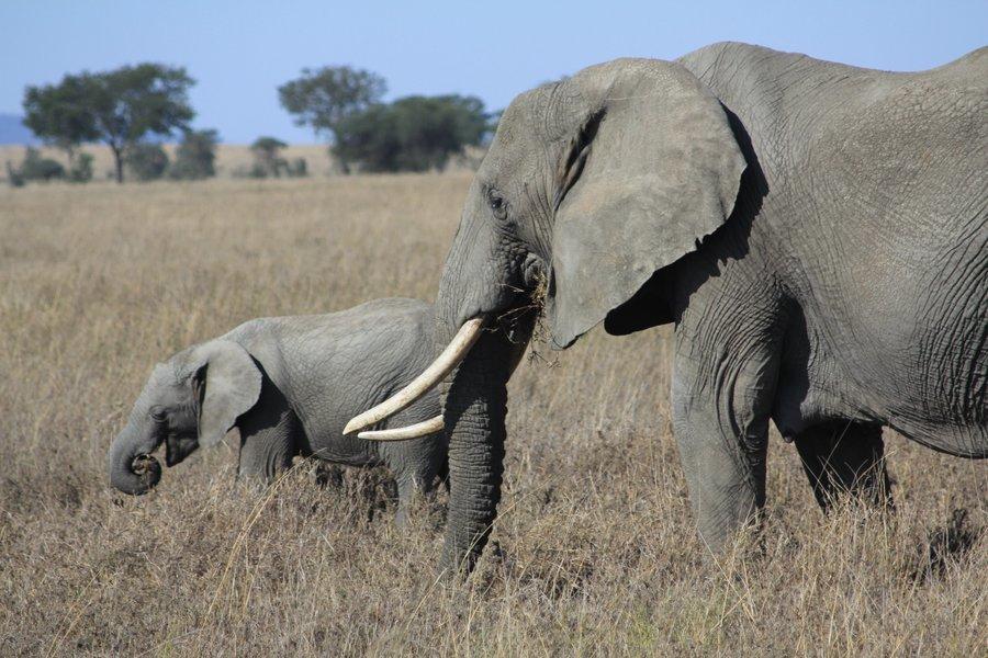 5-Day Budget Safari in Tanzania... - Tour