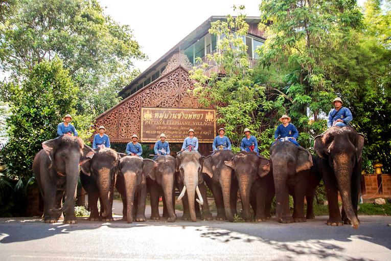 Elephant Village Trekking Pattaya, Sightseeing in Pattaya - Tour