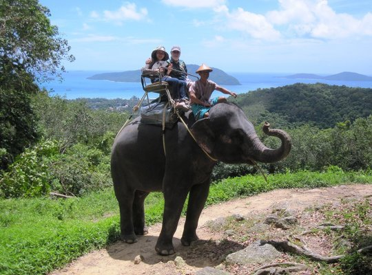 Safari C (Elephant Trek + Monkey Show+Ox Cart+Thai Cooking Show+Thai Boxing+Fish Spa), Phuket - Tour