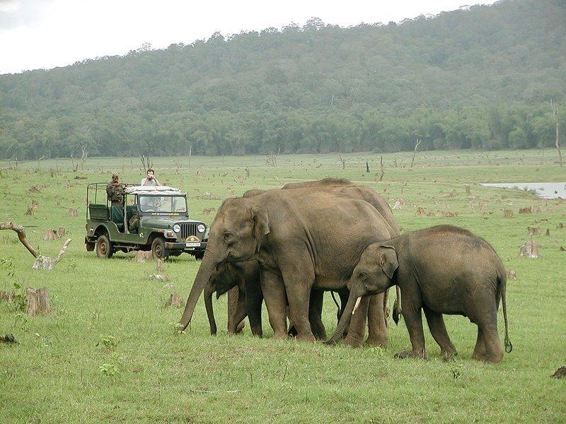 Nagarahole & Irupu falls - Tour