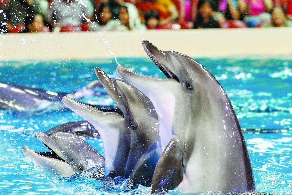 Dubai Dolphinarium - Dolphin & Seal Show with transfers - Tour