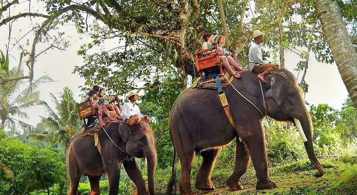 Elephant Safari Ride Tour with Buffet Lunch, Sightseeing in Bali - Tour