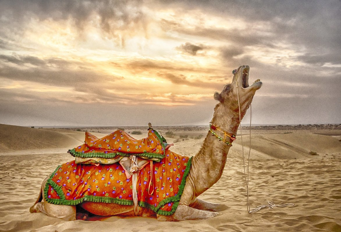 Rajasthan Packages - Collection