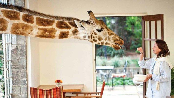 Highlights of Tanzania and Kenya Luxury Safari - Tour