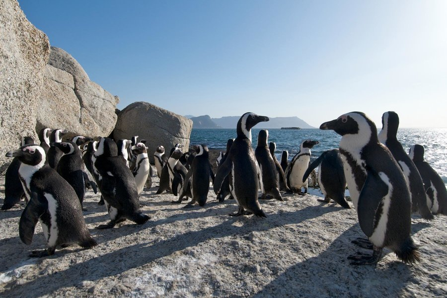 Cape Peninsula Tour, Sightseeing in Cape Town - Tour