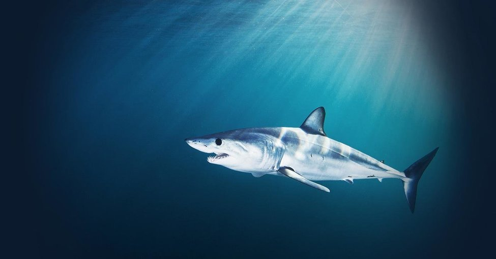 Shark Cage Diving Tour with Breakfast & Lunch, Sightseeing in Cape Town - Tour