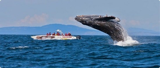 Whale Route Tour, Sightseeing in Cape Town - Tour