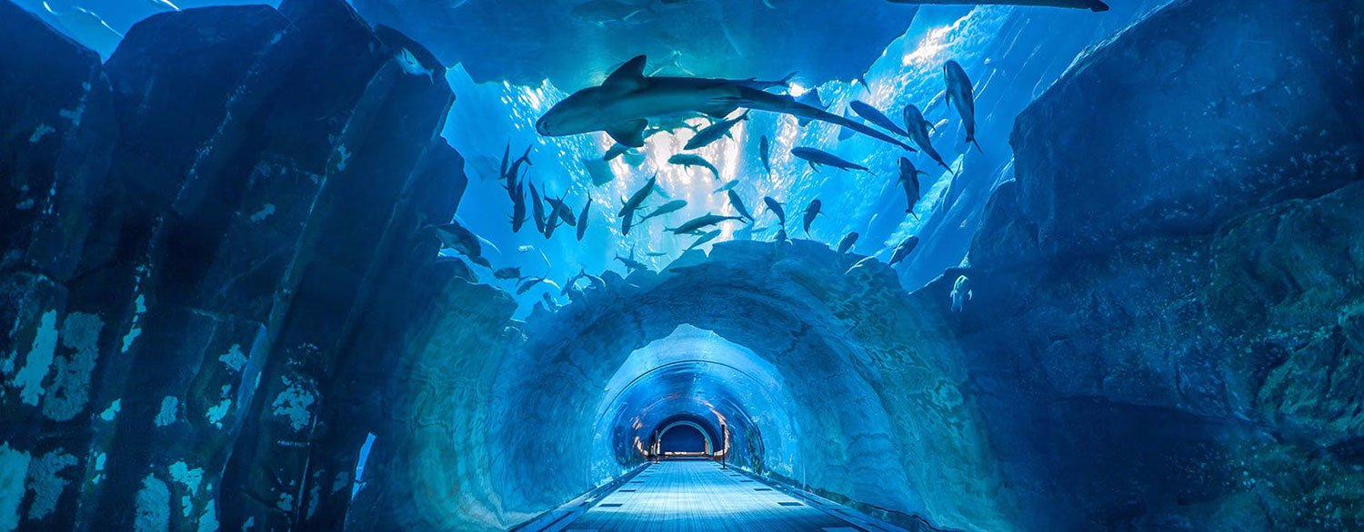 Buy Dubai Aquarium and Under Water Zoo Tickets and Explorer with Glass Bottom boat - Tour