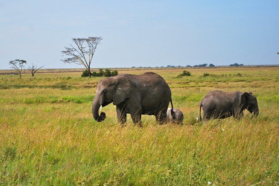 East Africa Safari and Beach Holiday in Zanzibar - Tour