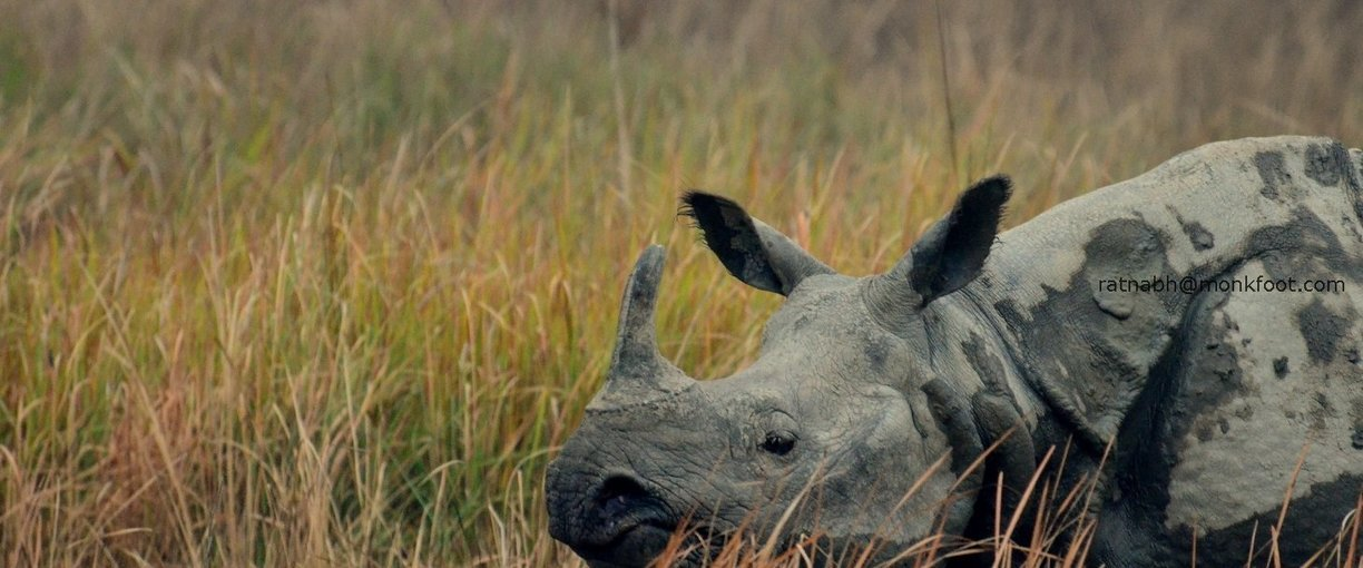 Kaziranga and Hoolongapar - Tour