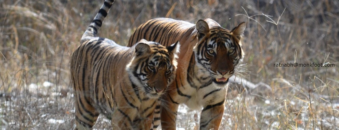 Ranthambhore National Park - Tour