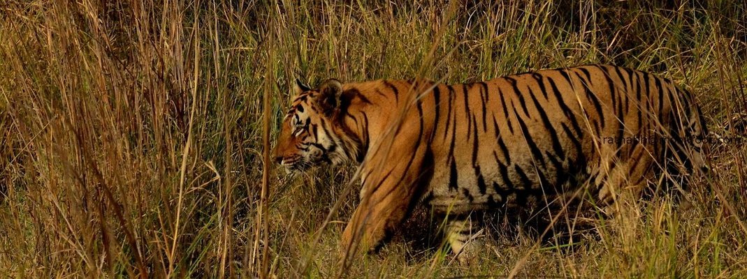 Bandhavgarh National Park - Tour