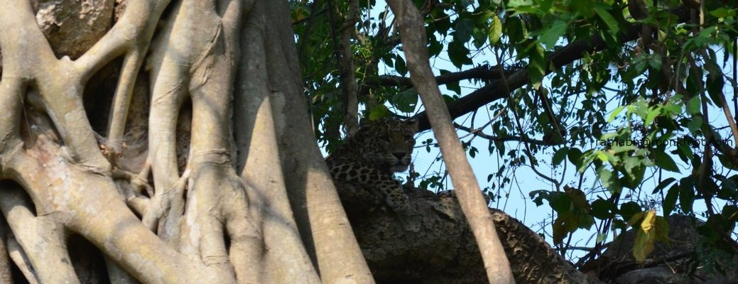 Satpura National Park and Bhimbetka - Tour