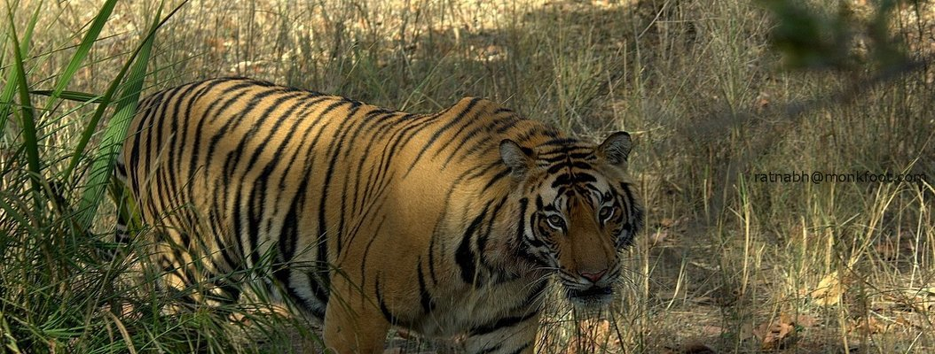 Kanha National Park - Tour