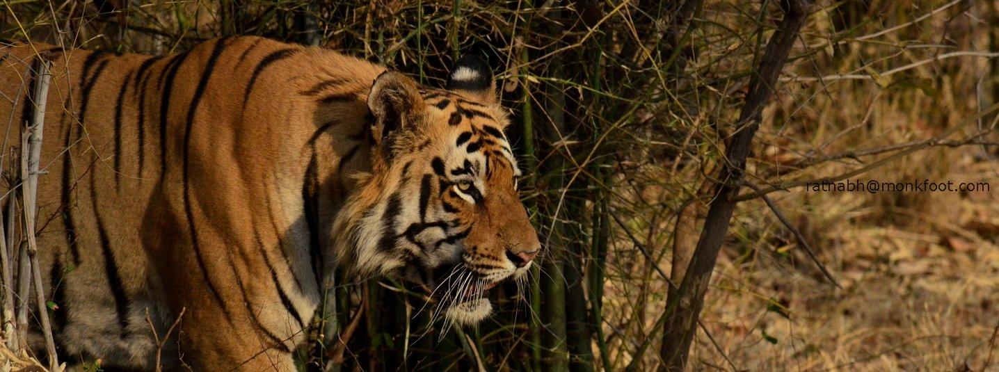 Tadoba National Park - Tour