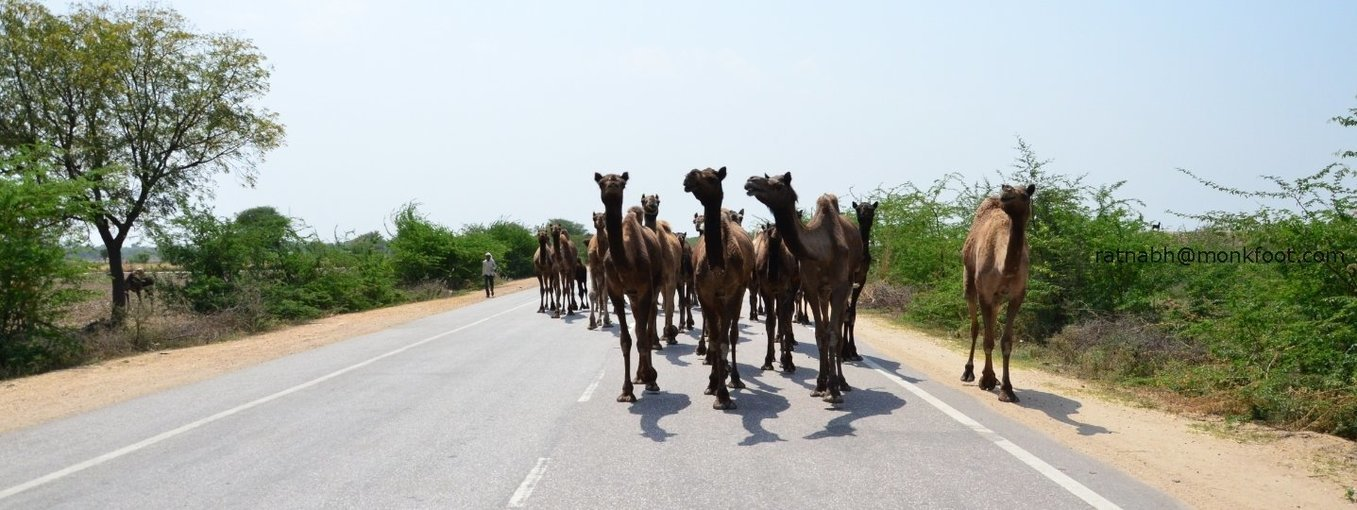 Unusual Rajasthan - Tour
