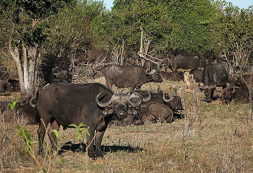 Chobe Day Trips - Tour