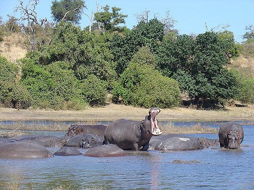 4 Days 3 Nights Victoria Falls & Chobe National Park - Tour