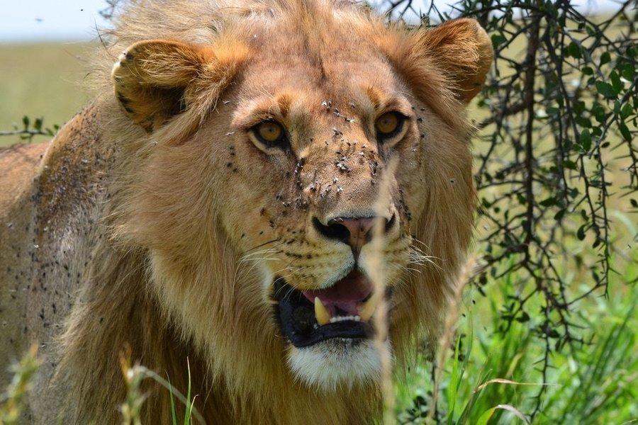 3-Day Safari from Mwanza to Serengeti and Ngorongoro Crater, drive back to Mwanza - Tour