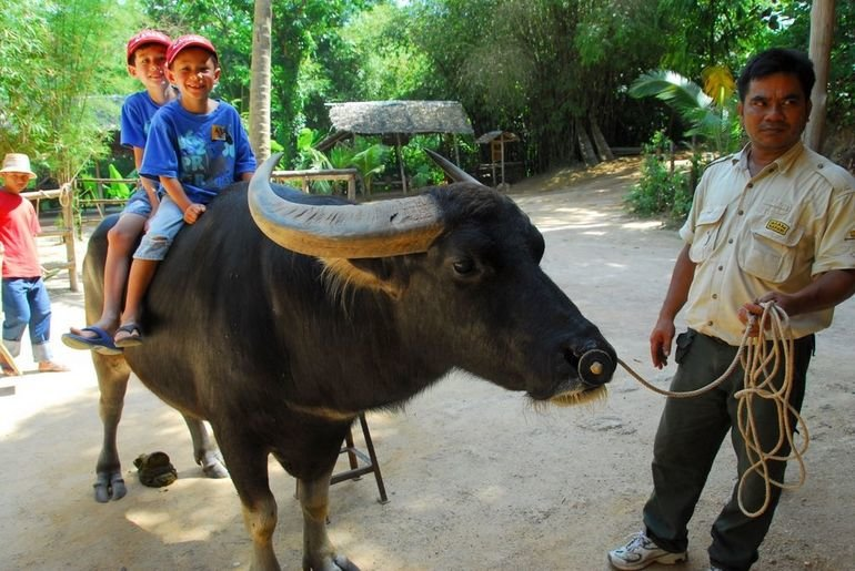 Phuket Half Day Safari B (Elephant Trek + Monkey Show +Thai Cooking Show+Thai Boxing +Buffalo Photo) - Tour