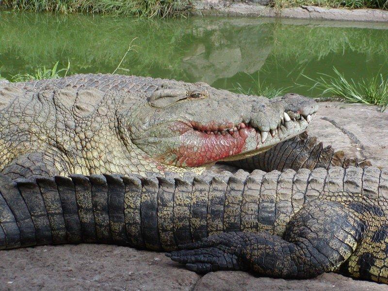 Livingstone Reptile Park Tour - Tour