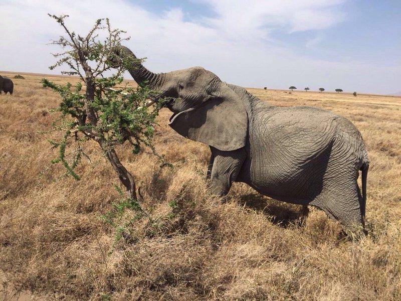 10-Day Kenya and Tanzania Safari - Tour
