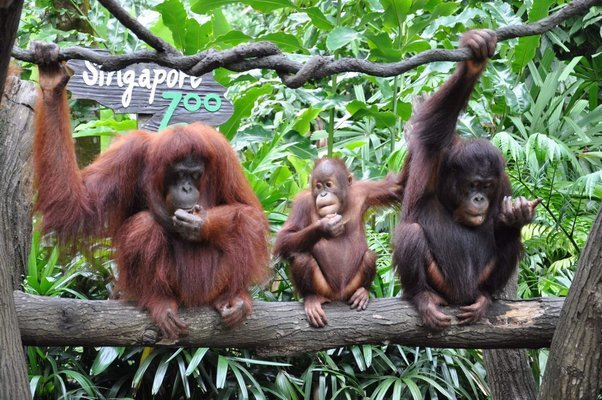Singapore Zoo + Night Safari Combo Tickets in Singapore - Tour