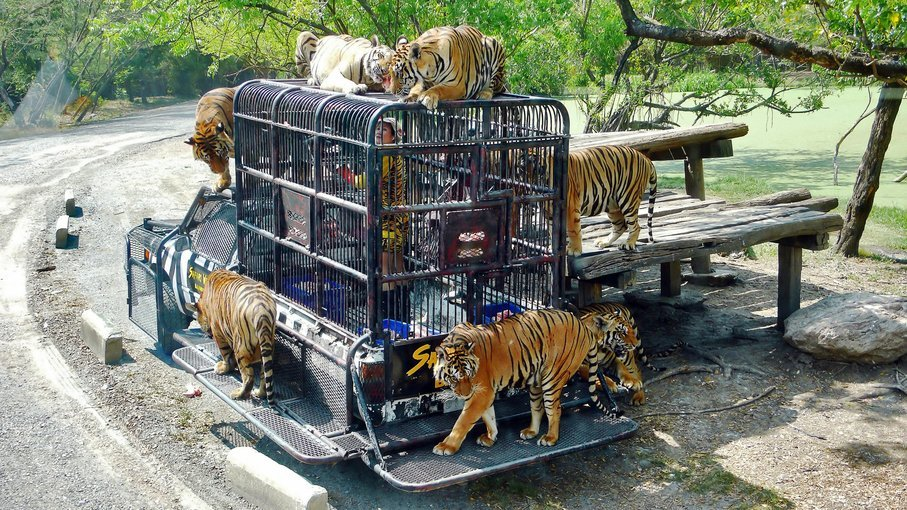 Safari World and Marine Park with Lunch Tickets in Bangkok - Tour