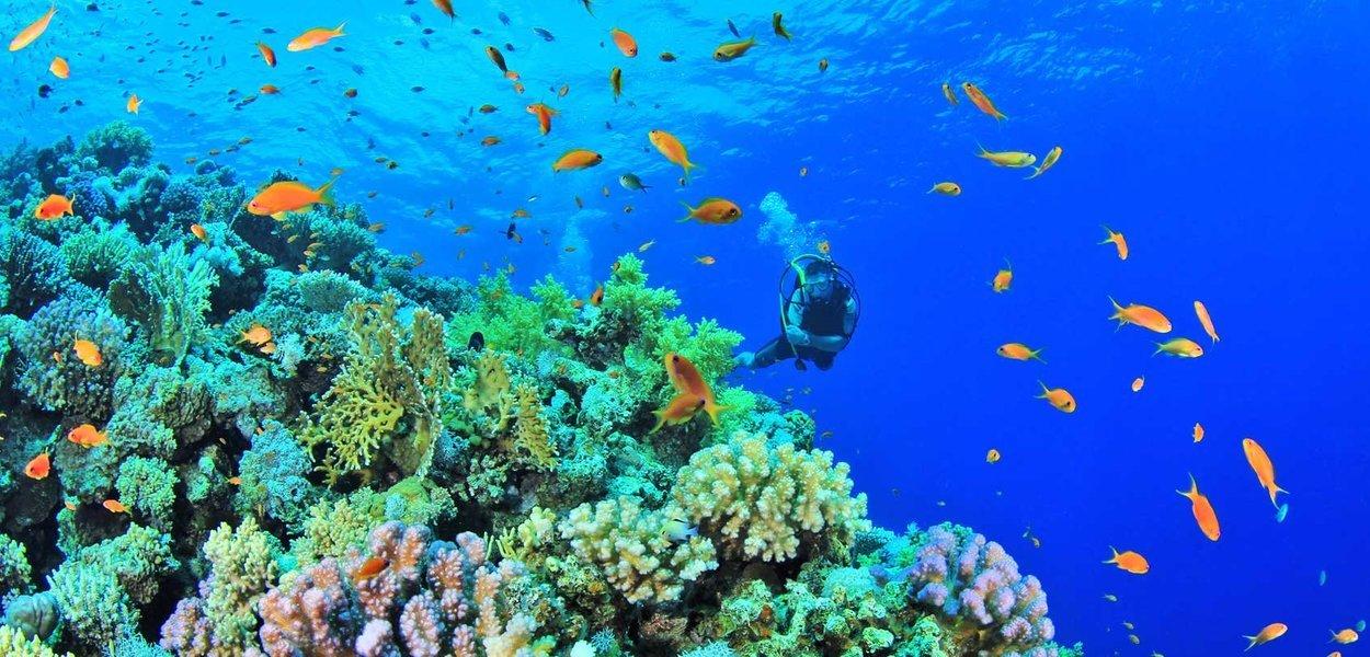 Anilao Diving, Sightseeing in Manila - Tour
