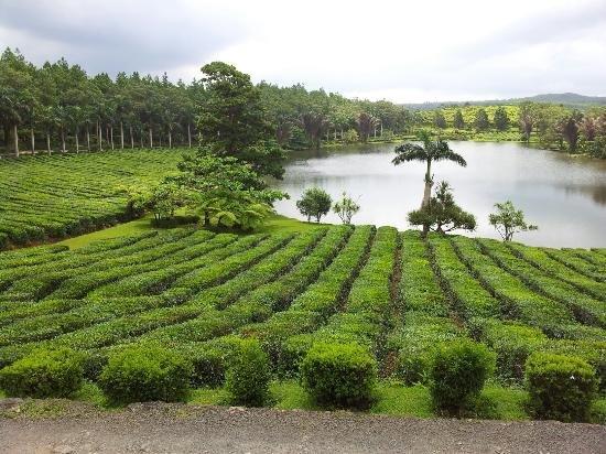 Tea Route Tour Tickets in Mauritius - Tour