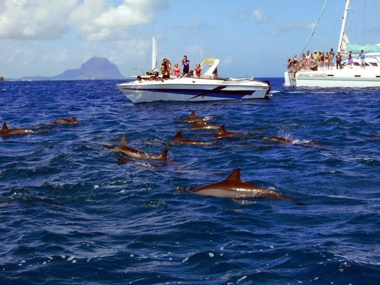 Speed Boat Thrills Tour Tickets in Mauritius - Tour