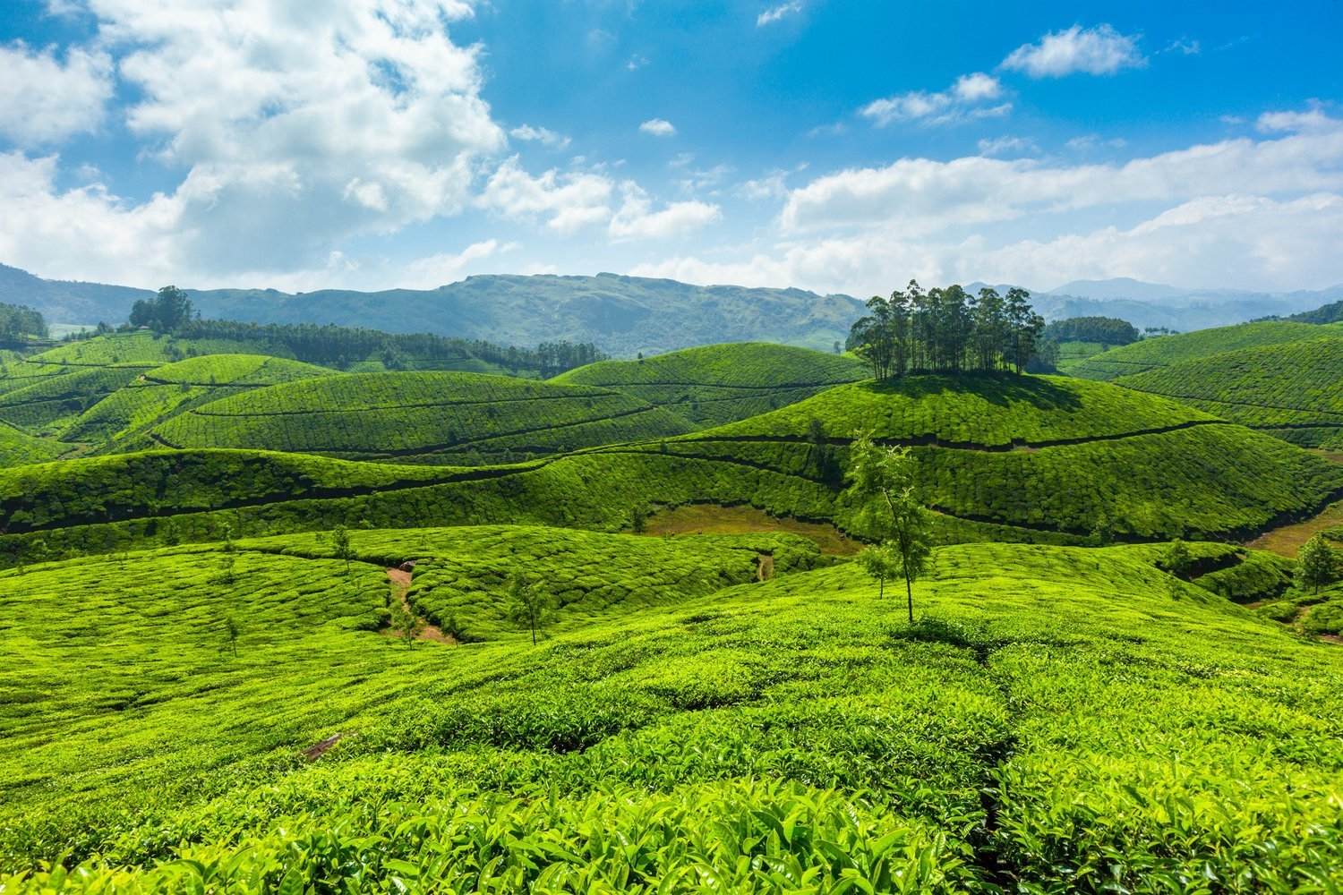 Kerala Tour Packages- Explore the Incredible South India