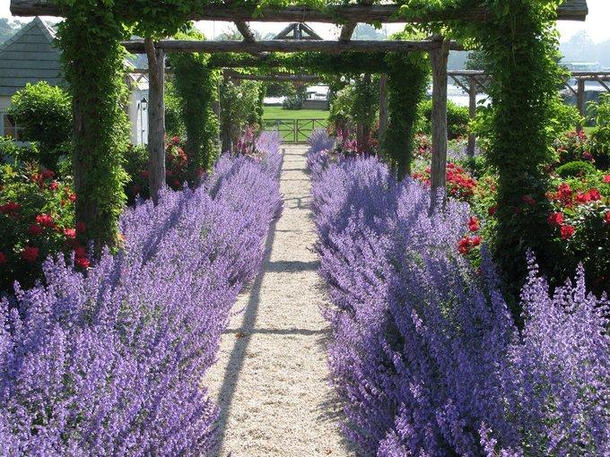 Warratina Lavender Farm Tickets in Melbourne - Tour