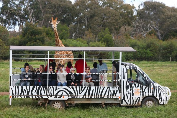 Werribbee Open Range Zoo Tickets in Melbourne - Tour