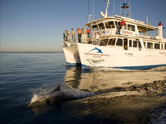 Dolphin Watch Cruise Tickets in Sydney - Tour