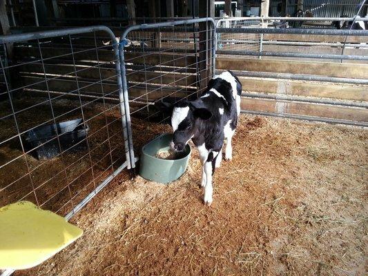 Warrook Cattle Farm Tickets in Melbourne - Tour