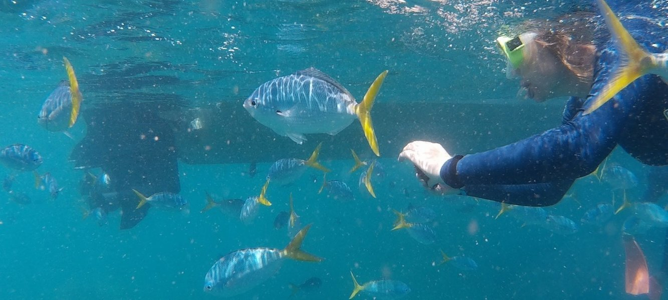 Snorkeling Day Trip and Beach Barbecue in Goa - Tour