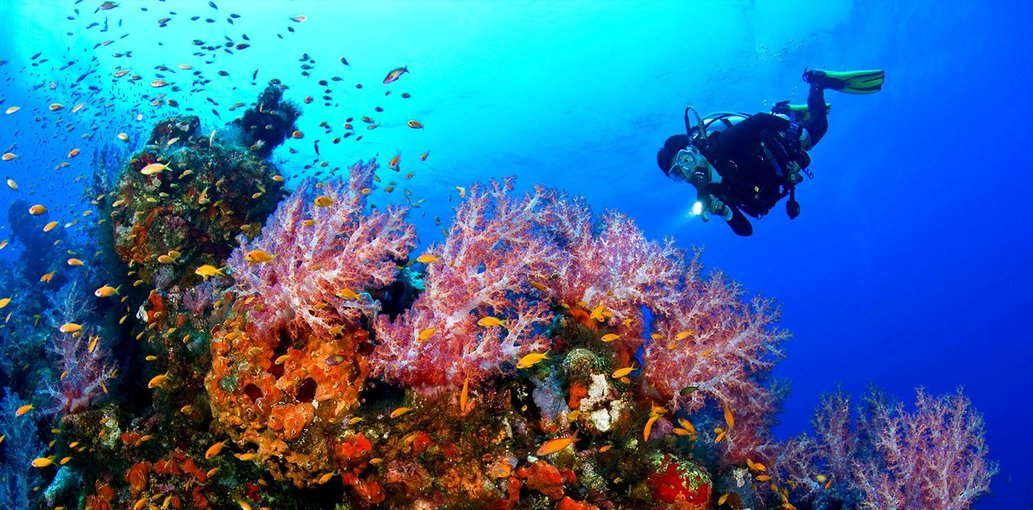 Scuba Diving at malvan - Tour