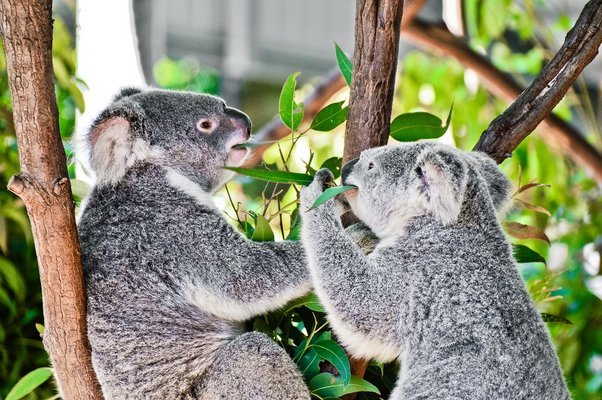 Tropical Fruit World and Currumbin Tour, Sightseeing in Gold Coast - Tour