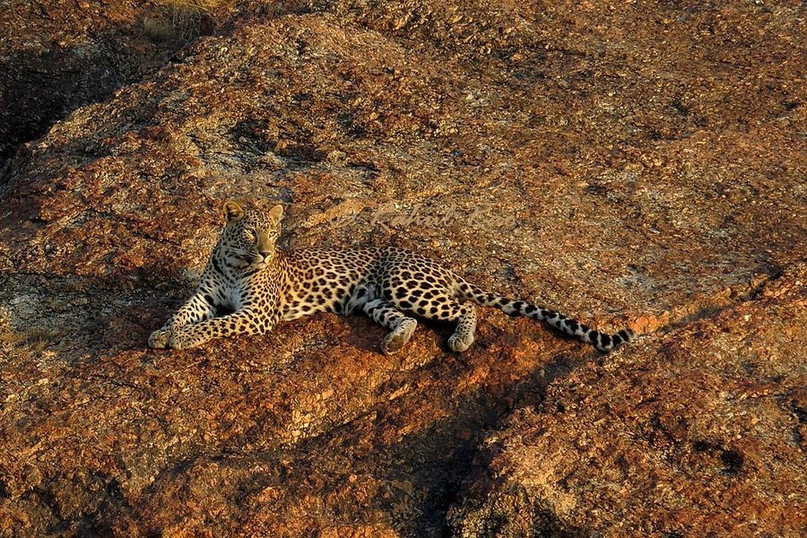 Bera - Leopards of Jawai - Tour