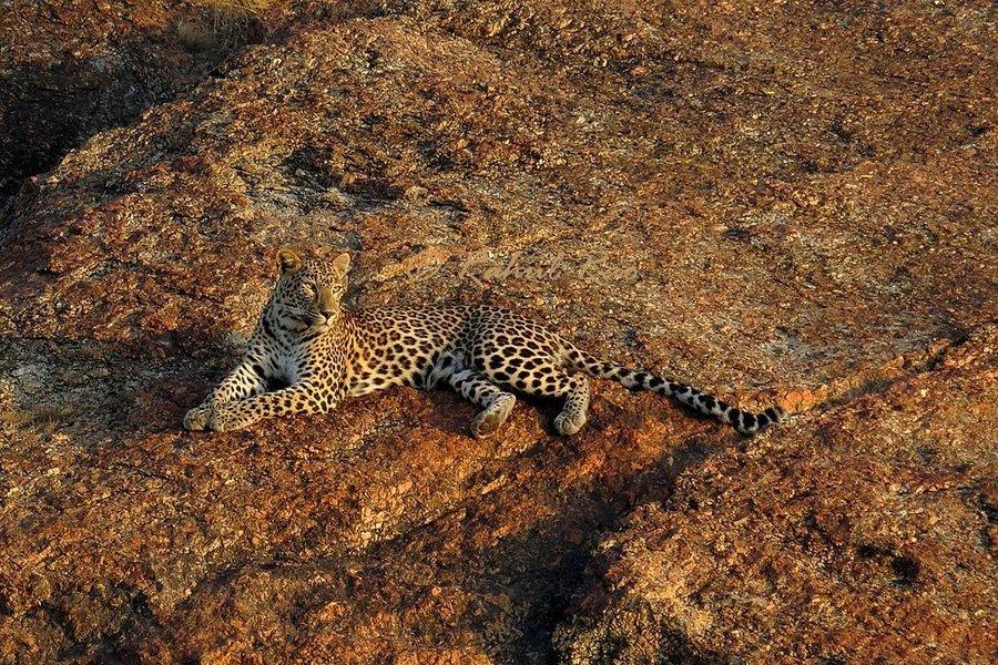 Bera - Leopards of Jawai (Ex - Ahmedabad) - Tour