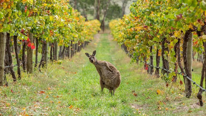 Hunter Valley Harvest Wine Experience, Sightseeing in Sydney - Tour